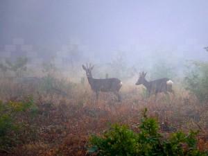 """© """"Entre la niebla"""" ©"""