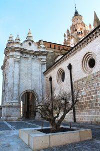 Imagen del exterior de la Catedral de Tarazona con un granado a sus pies.